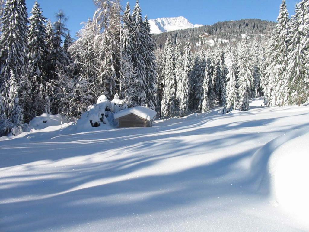 Pascolo zona Cason in Val Brenta