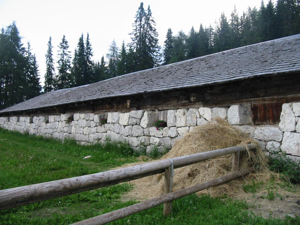 stallone montagnoli